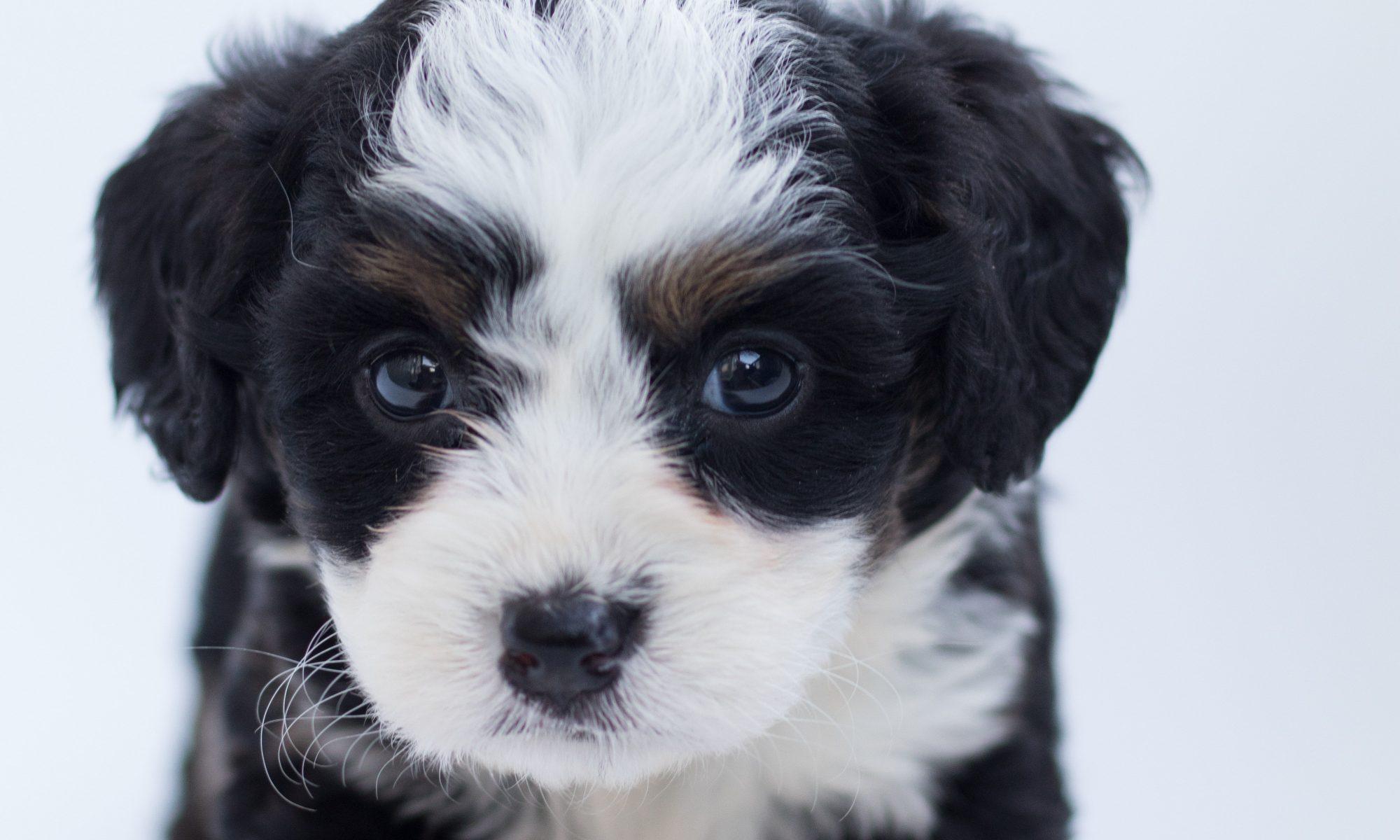 Hier moet je aan denken bij de aanschaf van een puppy